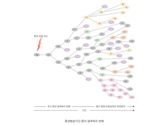 종양형성기간 중의 염색체 수 변화 그림.bmp
